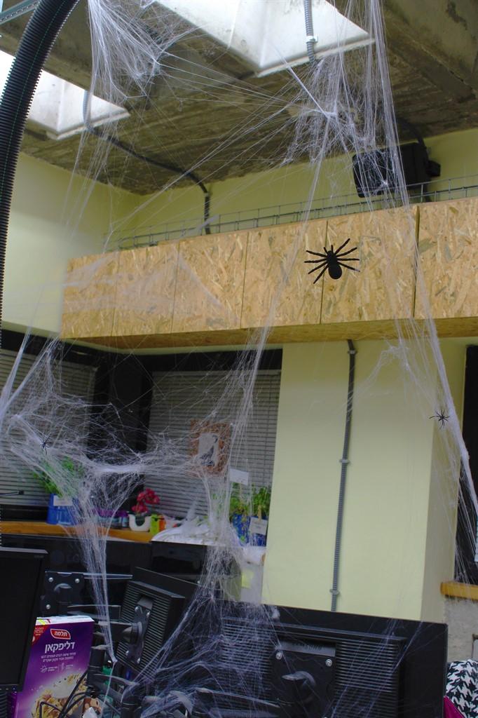 כורי עכביש עם עכביש עליהם