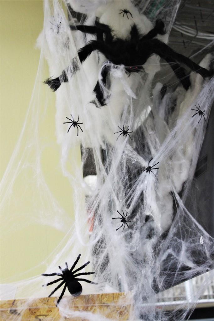 קן עכבישים